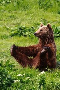 Yoga_Bear